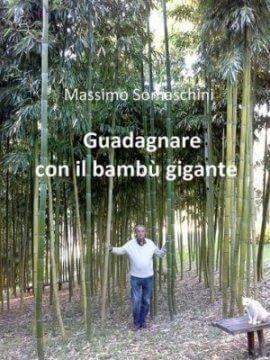 investire nel bambù gigante